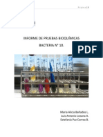Informe de Pruebas Bioquímica