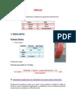INFO N°2 EMBALAJE- II UNIDAD (Autoguardado)