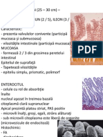 Histologie - sistemul digestiv