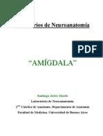 amigdala2