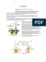 Filo Cnidaria- (Biologia )
