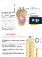 Citoplasma, Citoesqueleto, Ribosomas