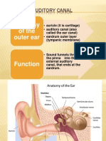 Objects in Auditory Canal