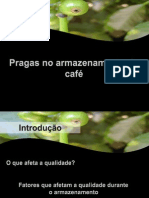 Pragas Armazenamento Café