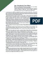 Parakeet Care Sheet