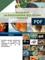 Unidad IV Div Animal 2012