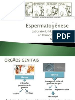 espermocultura como e feito