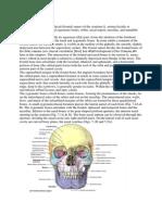 Anatomi zmc.docx