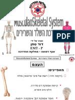 מערכת השלד והשרירים
