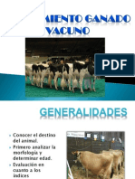 Juzgamiento Vacas Lecheras