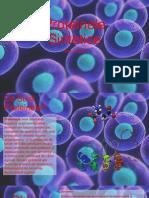 Proteinele Sintetice