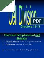 ap - cell division - mitosis