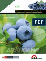 Estudio Prefactibilidad Produccion Comercializacion Arandanos