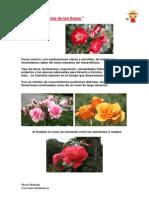 1-Programa y Dossier Curso Rosales
