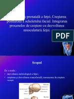 Dezvoltarea Prenatală a Feţei