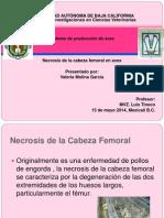 Necrosis de La Cabeza Fewmoral