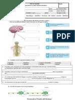 prueba sistema nervioso.docx
