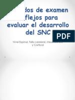 Exposicion Desarrollo de Los Reflejos SNC OCTUBRE 2014