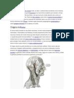 Facial Nervio