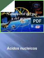Unidad I Gen y Genoma