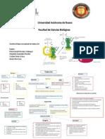 mapa de traducción.pdf