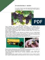 Odredivanje_secera.pdf