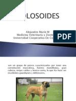 Molosoides