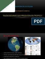 Mejoramiento Genetico Tropico