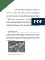 Bakteri Acetobacter Xylinum