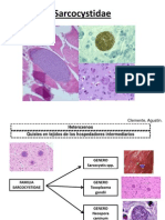 Sarcocystidae