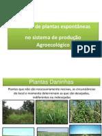 Plantas espontaneas