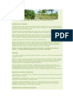 GUANANDI ,Reflorestamento