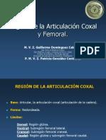 Región de La Articulación Coxal y Femoral