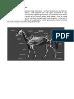 Anatomia Del Caballo Sistemas