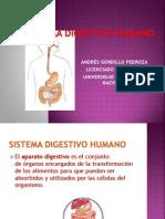 Sistema Digestivo Humano