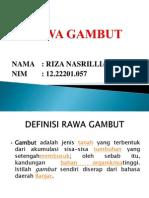 Rawa Gambut