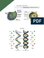 Esttuctura y Tipos de Virus