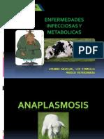 anaplasma, carbunclo