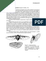 4 Sistematica Insectelor 2 (1)