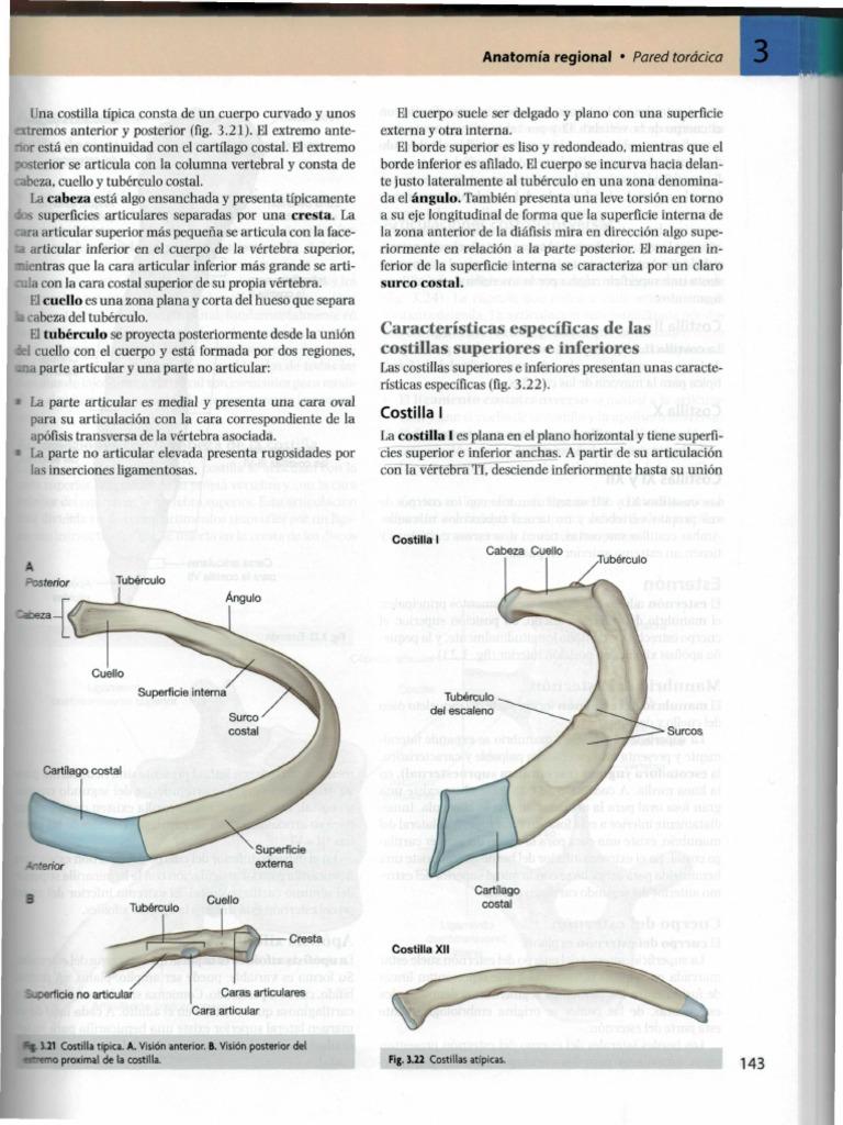 Anatomía Costillas y esternón