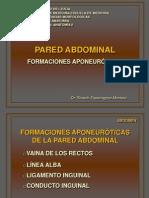 Abdomen Pared 1