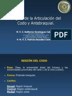 Región de La Articulación Del Codo y Antebraquial