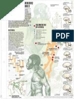 arbol genealogico hominidos.pdf