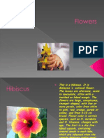 navasakti 5m flowers