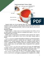 Sistemul Senzorial Optic Vederea Ochiul