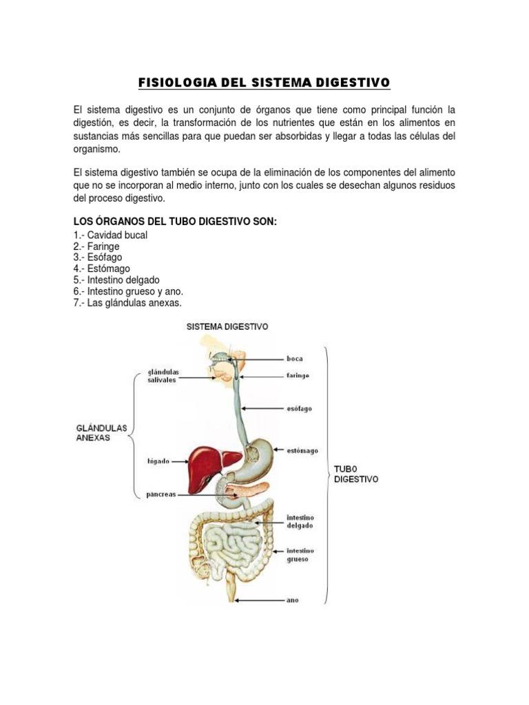 Fisiologia Del Sistema Digestivo. Guia.