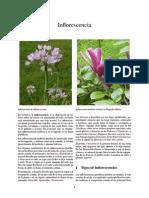 Inflorescencia.pdf