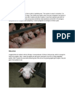Pig Stages Growth