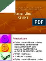 Paşca Alina XI SN1
