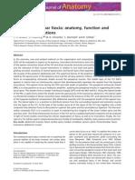 Thoracolumbal Fascia Anatomy J Anat